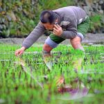 CNNIC Report: 27.9% Of Chinese Netizens Live In Rural Areas